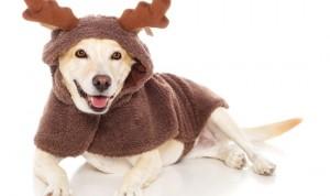 holiday-dog-pet1