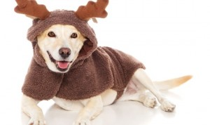 holiday-dog-pet1
